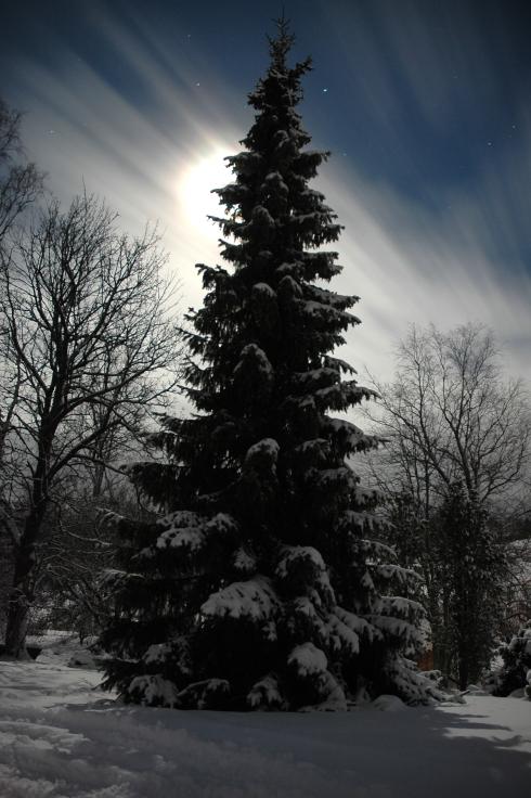 Tree highlight